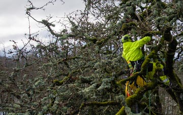 experienced Brent arborists are needed