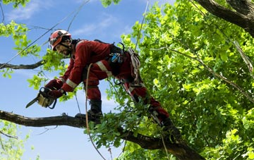 find trusted rated Brent tree surgeons