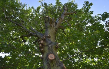 what is Brent tree surgery?